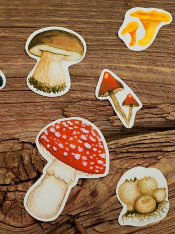 Autumn mushroom stickers set