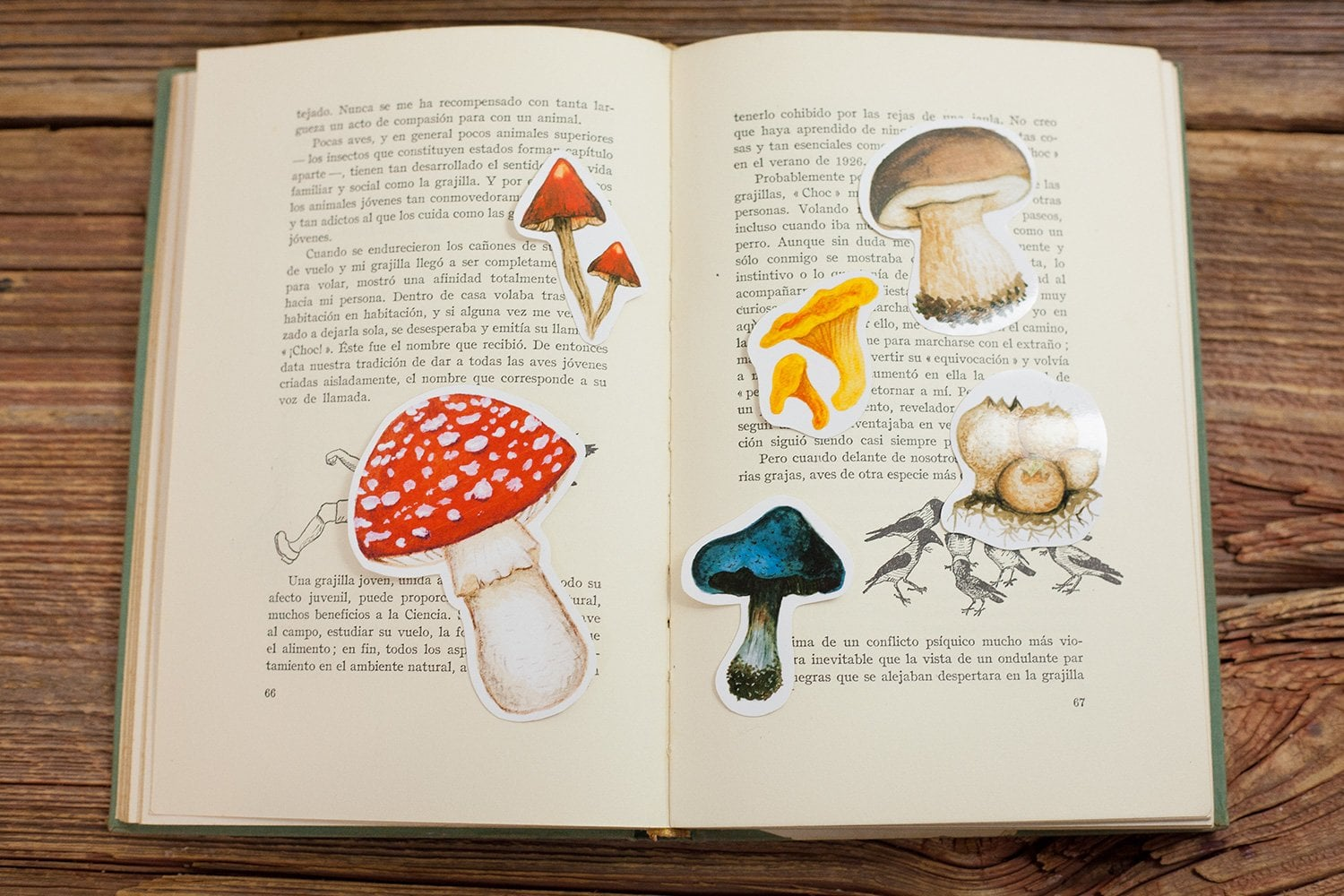 mushroom sticker set including 6 different autumn mushrooms in a book to show the size of each of the stickers