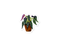 WarmSquirrel Begonia Maculata Individual Picture Mockup Default Default X