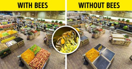 The image describes how supermarkets will look like if bees and pollinators disapear.