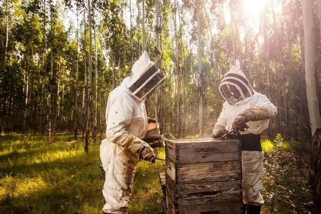 Two beekeepers in full gear.